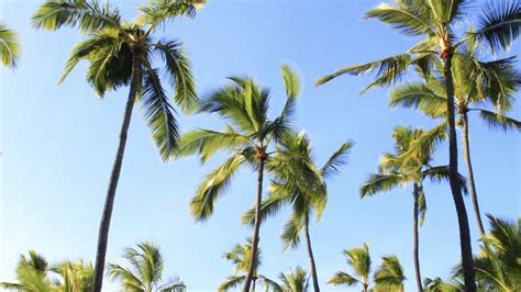 Kauai's Coco Palms Resort to Reopen in 2017 | TravelAge West